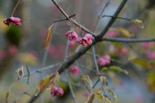 Herbst - die letzten Pastellfarben der Natur
