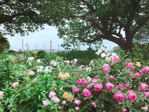 大佛次郎記念館横の『港の見える丘公園』にて