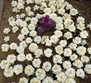 輪全体が一つのお花みたい。いずれも「花咲か公園」