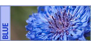 外壁カラー【ブルー】