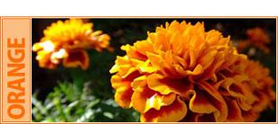 外壁カラー【オレンジ】