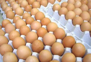 新鮮な卵です