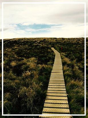Kepler Track. Neuseeland. Great Walk. Wanderlust.
