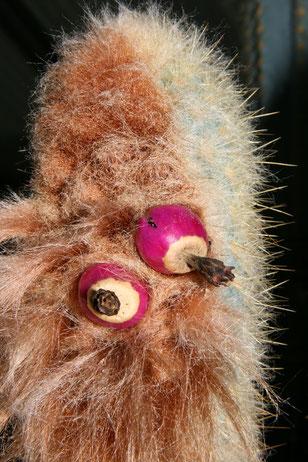 Micranthocereus purpureus