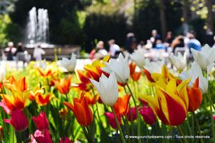 Parterres de fleurs et de tulippes du jardin du Hofgarten à Augsbourg