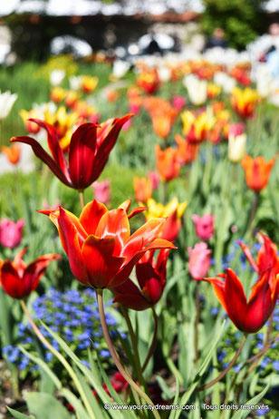 Fleurs du jardin romantique de la cour (Hofgarten) d´Augsbourg