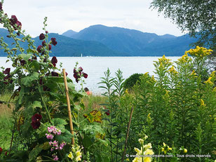 Les lacs bavarois en pleine nature