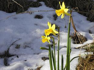 Ik weet dat liefde lente is, en ook een beetje sneeuw (Toon Hermans)