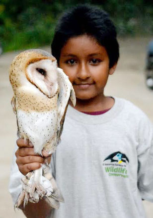 Wildlife volunteering in Trinidad and Tobago. Barn owl. Youth support. Education and awareness.