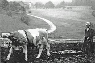 Beim Eggen 1942 auf dem Feld vor Kimleinsdorf. (Foto Hubert Hainz)