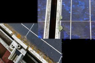 Algen und Moos auf Solar Modulen