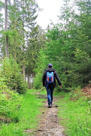 Liekwegen, Obernkirchen, Mitmachstationen, Naturerlebnispfad, Dinos Natur, Wandern, ganze Familie, Wald, Natur, Berghütte Brandshof