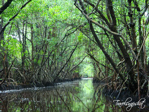 Mangrove Wilderness Tour