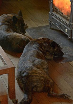 Cocoonen voor de houtkachel (Dido boven, Bobbie onder.. zie dikke buik)