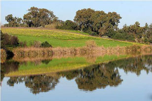 Lac de Reghaia (Est de la wilaya d'Alger).