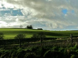 die grünen Weide-Landschaften in den Highlands