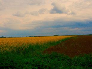 gelb leuchtende Rapsfelder dekorierten die Landschaft