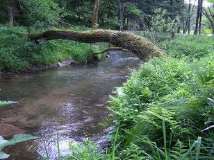 Waldführungen im Naturpark Spessart