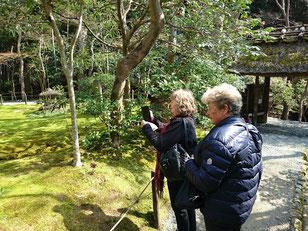 Gio-ji Temple,    Garden of the moss