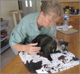 ost opathie pour le chat le chat forgeron. Black Bedroom Furniture Sets. Home Design Ideas