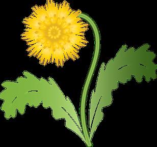 Crédit image: BilliTheCat récupéré sur Pixabay.com