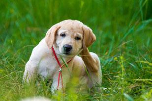hund leckt ständig pfoten