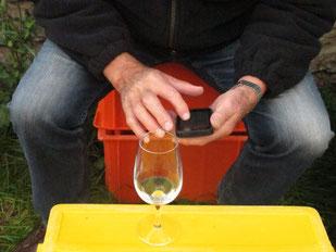 Handy, Weinlese, Glas