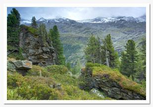 Tirol-Innergschlöss-Ochsenwaldboden-Christian Rebl-cr-foto.at