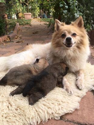 Bella und ihre Babys
