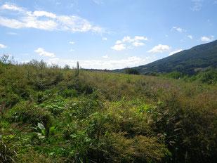 「プロジェクトD・福島ふれあいの森」予定地