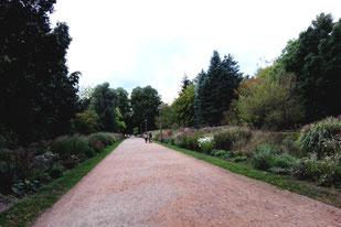 Der Weg eingesäumt mit Blumen und Sträuchern vom Eingang zu den Schaugewächshäusern Botanischer Volkspark Blankenfelde. Foto: Helga Karl