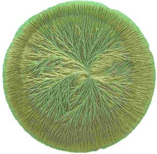 Kristallisationsbild, Bio-Buttermilch, handgerührt