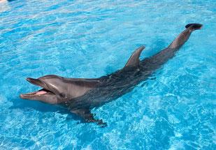 を した イルカ なく しっぽ 『しっぽをなくしたイルカ 沖縄美ら海水族館フジの物語』(岩貞