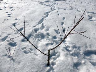 木の周りにウサギの足跡