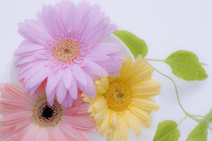 白いダリアの花が活けられた花びん。