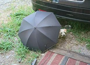 陶板浴ハイジ 日傘