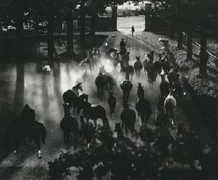 Heimkehr der Herde © Hein Gorny