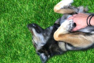 Anima-Balance | TCM für Tiere | Alternativmedizin | Bachblüten | Gemmotherapie | Ceres | Homöopathie | Schüssler Salz | Phytotherapie