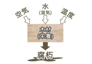 木材の腐朽について 中谷産業株式会社