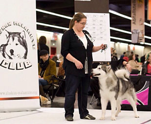 Internationale Rassehundeausstellung Nürnberg. 10.01.2015 Black Claw's Banu/️Nala V3