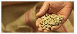 豆の種類の説明