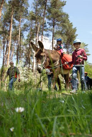 Les ânes de Madame - Balades accompagnées en Sologne, Val de Loire, châteaux de Chambord, Cheverny, Villesavin, du Moulin - Vacances nature en famille et entre amis - Comme des Robin des Bois
