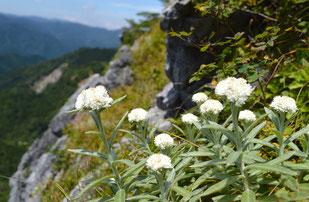 絶景と夏の花々を楽しみます♪