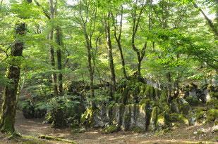 神秘の森 白鳥山「御池」
