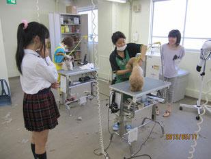 ペットの整髪場を見学する生徒たち。