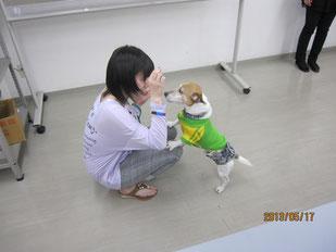 犬の調教の模擬訓練。