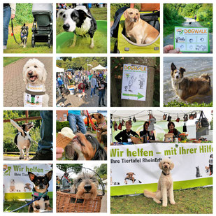 Collage DogWalk 2014-2015-2016-2017