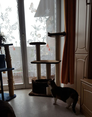 Monjas neuer Kratzbaum