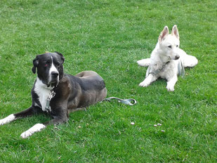Boncuk und Jule, Foto vom Halter