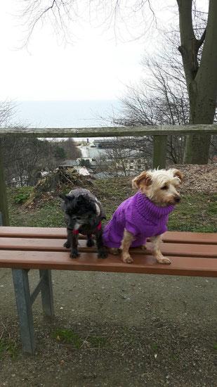 Ghina und Sheela, Foto vom Halter